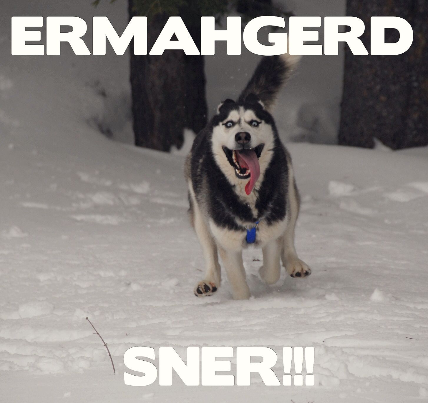 Ermahgerd sner!!! | Seriously though | Pinterest