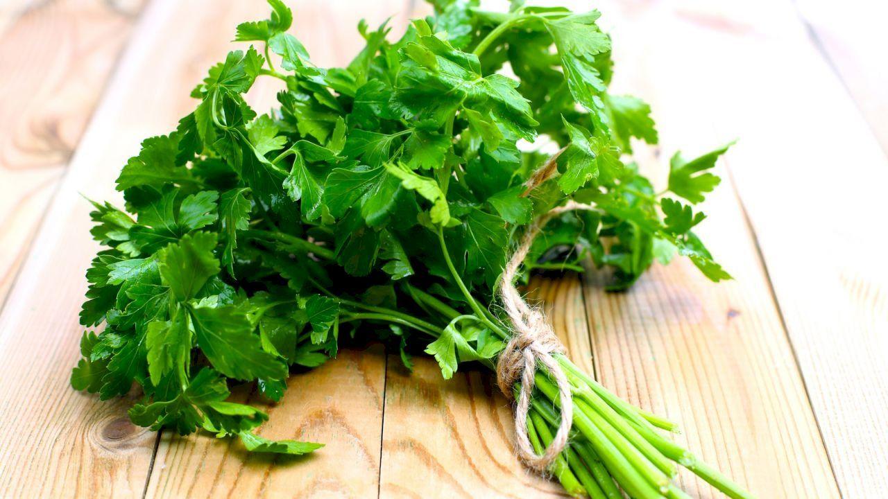 فوائد ماء البقدونس Herbs Growing Parsley Parsley Benefits