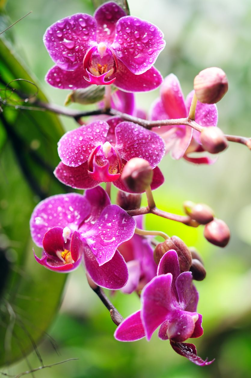 Tout Savoir Sur Le Rempotage Des Orchidees Rempoter Orchidee