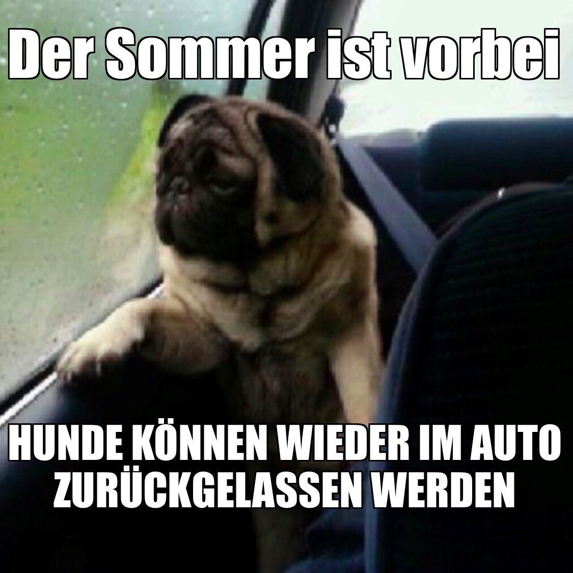 Hunde Konnen Wieder Im Auto Zuruckgelassen Werden Memes Humor Hund Auto Satire