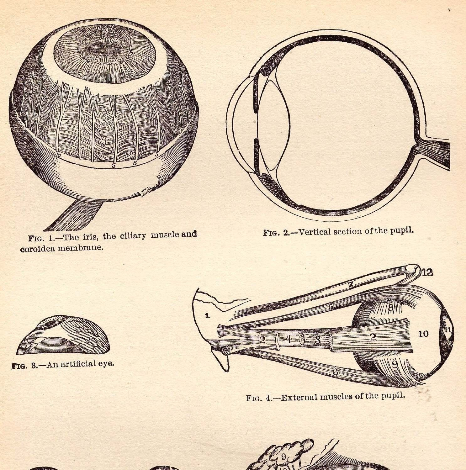 A diagram of the eye (Source: https://www.etsy.com/market ...