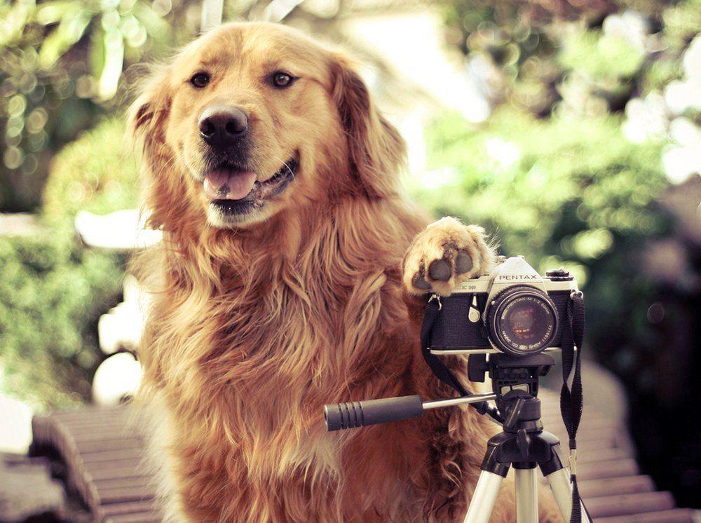 Как пользоваться функциями на фотоаппарате кэнон лесу