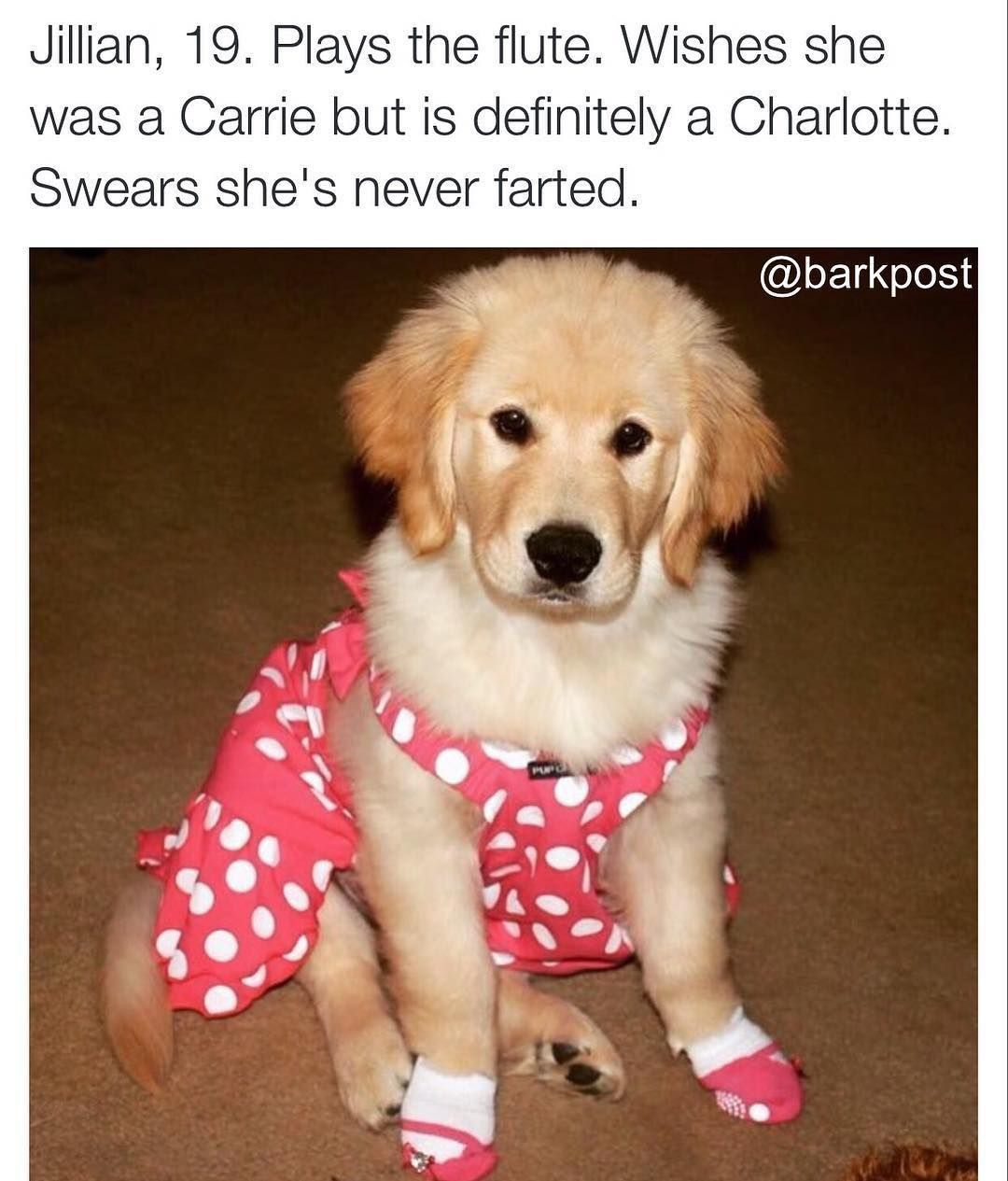 Pin by terry on funny dog bious u can thank