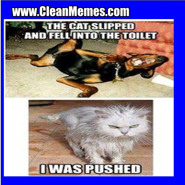 Funny Cat Meme Clean : Funny clean memes google search pinterest