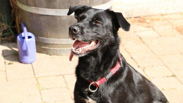 Sardinienhunde E V Sardinien Tierschutz Hilfe Hundin