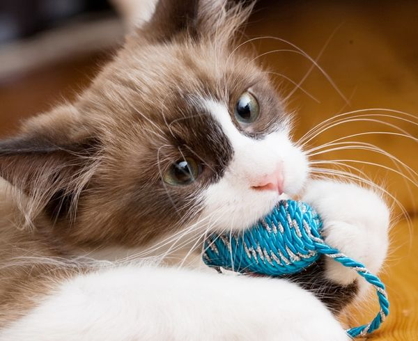 5 Tips To Stop Your Kitten From Biting Catster Cat Behavior Cat Care Kittens And Puppies