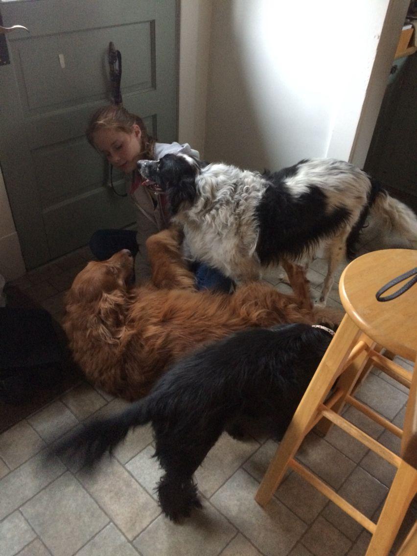 DOG STAMPEDE!!! Dogs