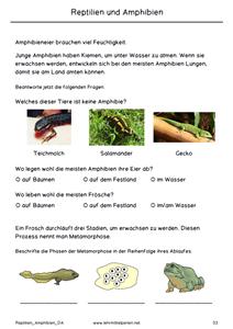 Reptilien und Amphibien | Lehrmittel Perlen | Pinterest | Reptilien ...