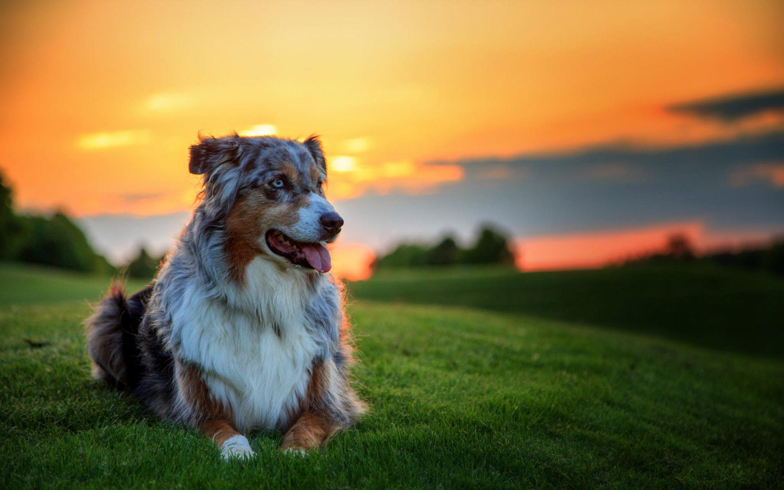 3c734c81d99f86c46756ceb0b4d6a08c 40 wallpapers and pictures of dogs nice dogs pinterest