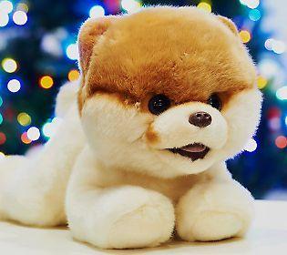 Boo The World Cutest Dog World Cutest Dog Cute Dogs Dog Life