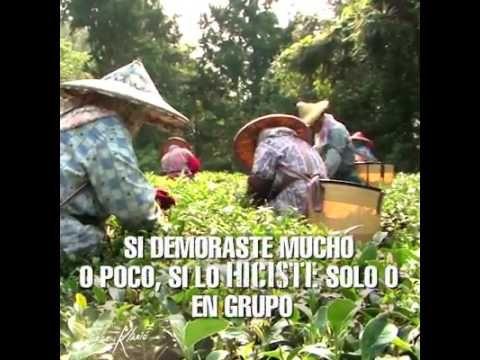Apoyo Docente Ecuador   Criticarte