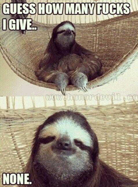 I shall call this, Friday Sloth    Sloths   Sloth, Cute sloth, Baby