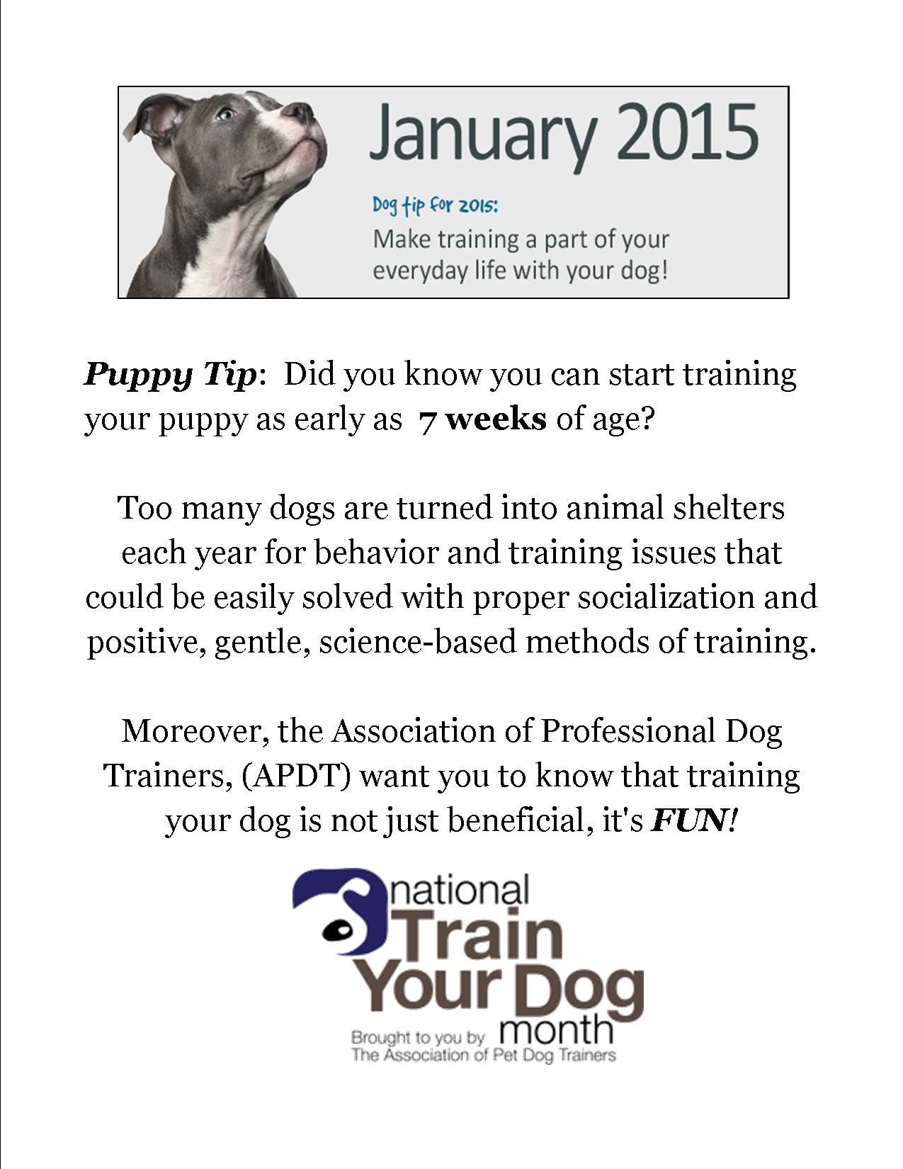 January Is National Train Your Dog Month Check Out The Training