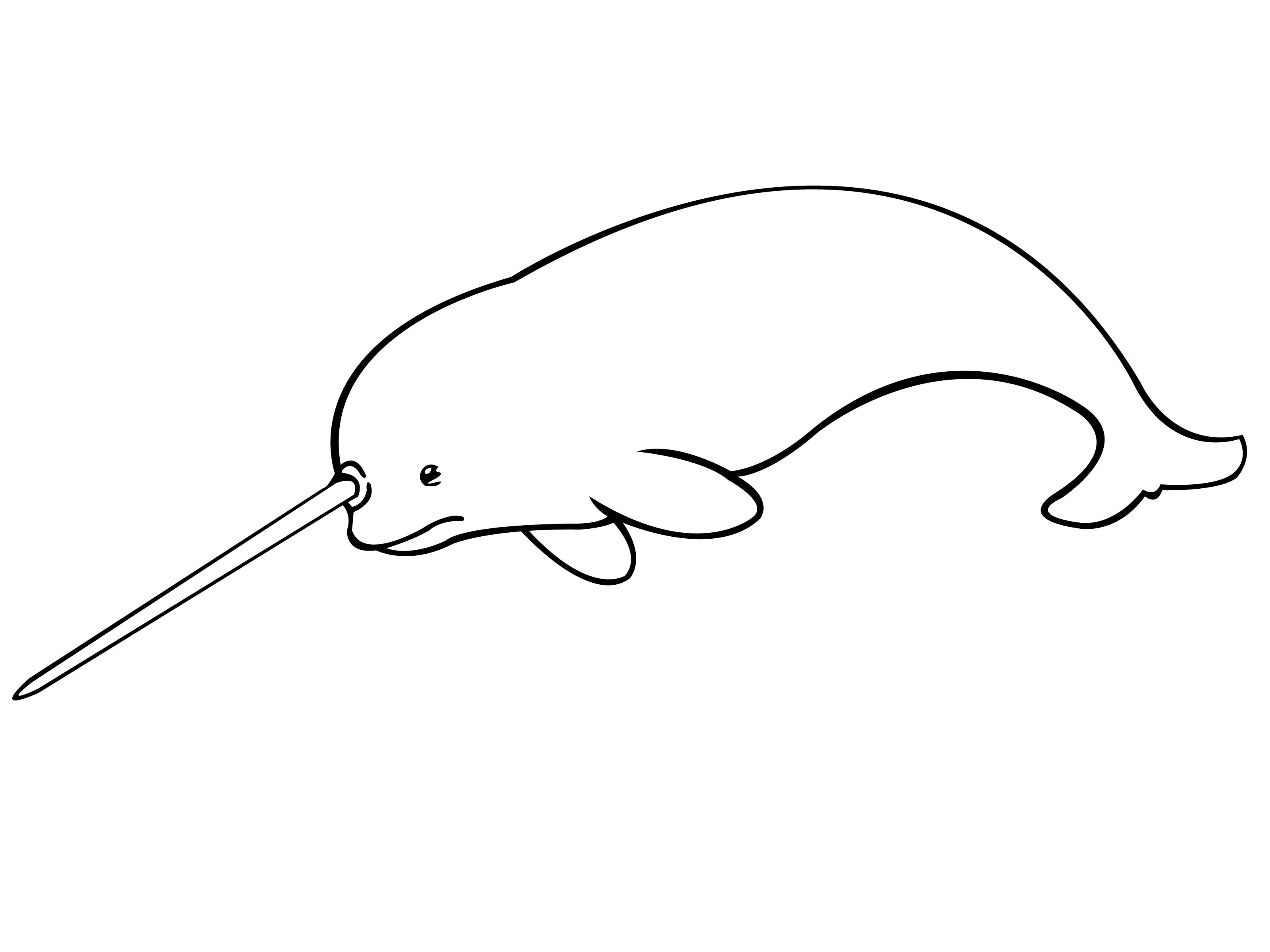 how to draw a narwhal 5 steps with pictures wikihow
