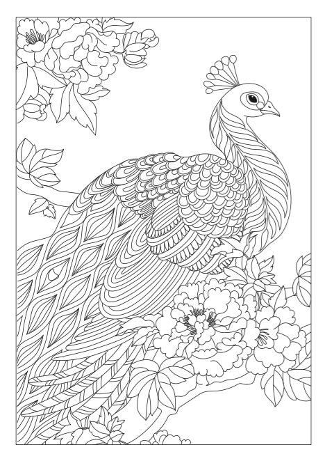 peacock sitting amognst bushes xxv coloring book coloring page - Peacock Coloring Book