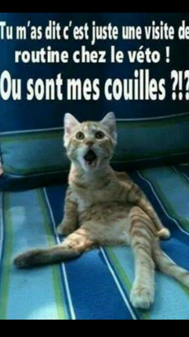 Chat drole | Photo drole animaux, Chat drôle, Blague chat