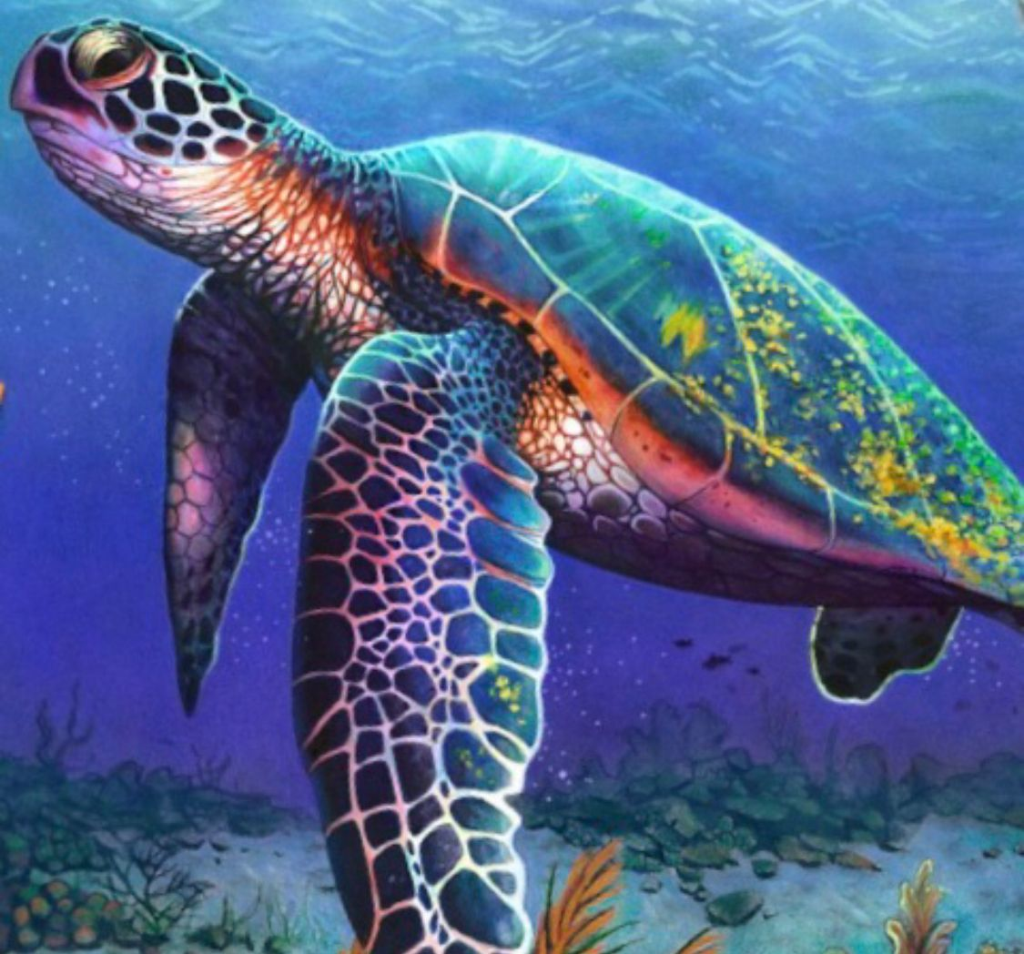 Amazing Colored Pencil Drawing Of A Sea Turtle Sea Turtle Art Turtle Drawing Turtle Painting