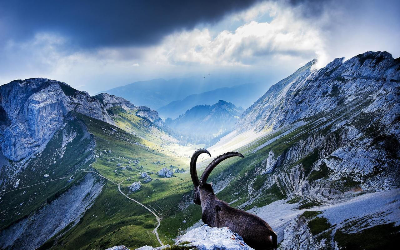 Pin By Jamie Kaminskas On Animals Switzerland Wallpaper