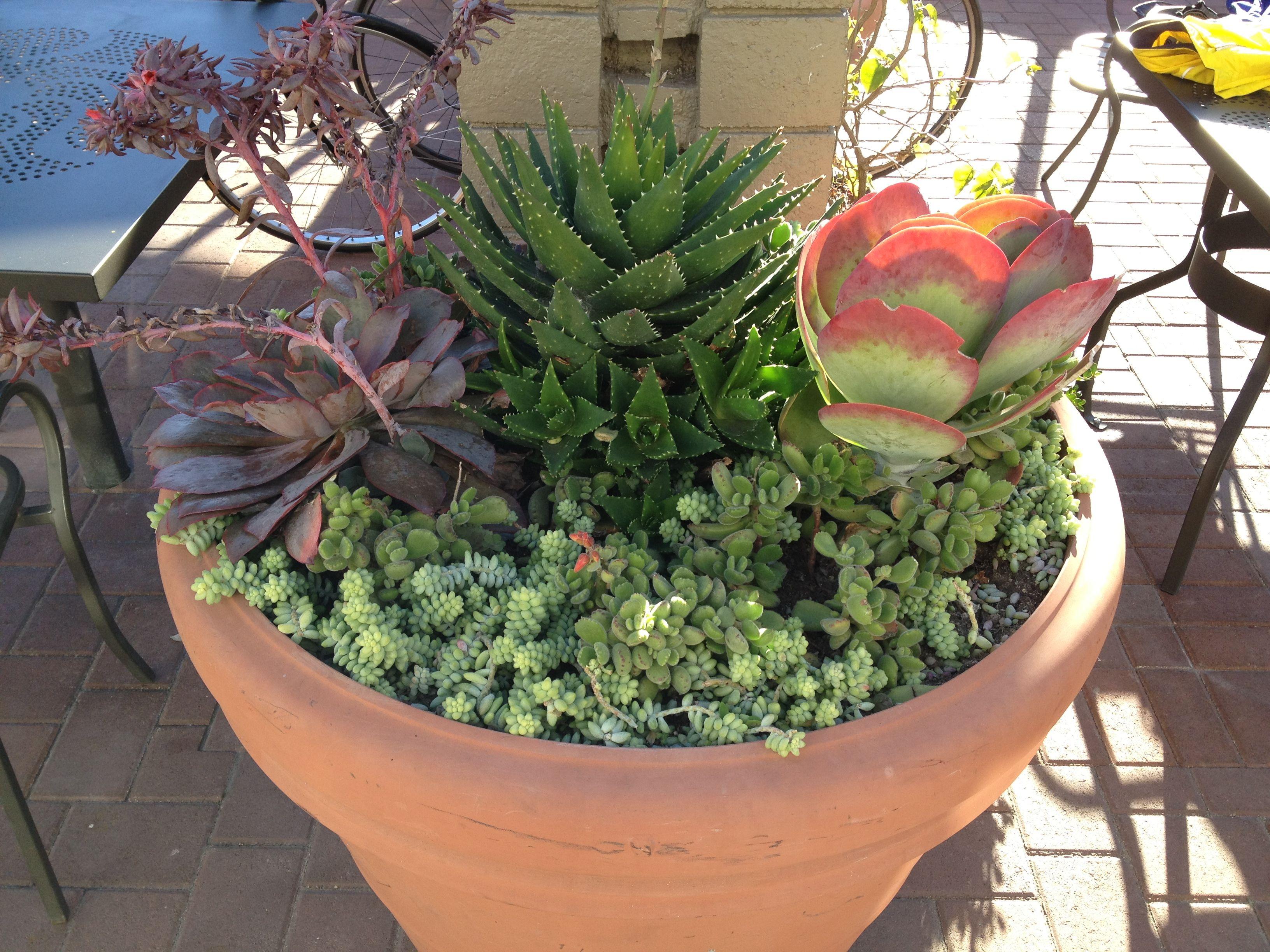 Succulent pot ideas for pots pinterest gardens