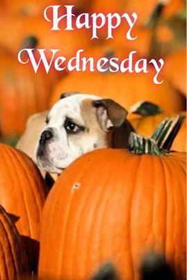 Bildergebnis für Happy Wednesday with Fall