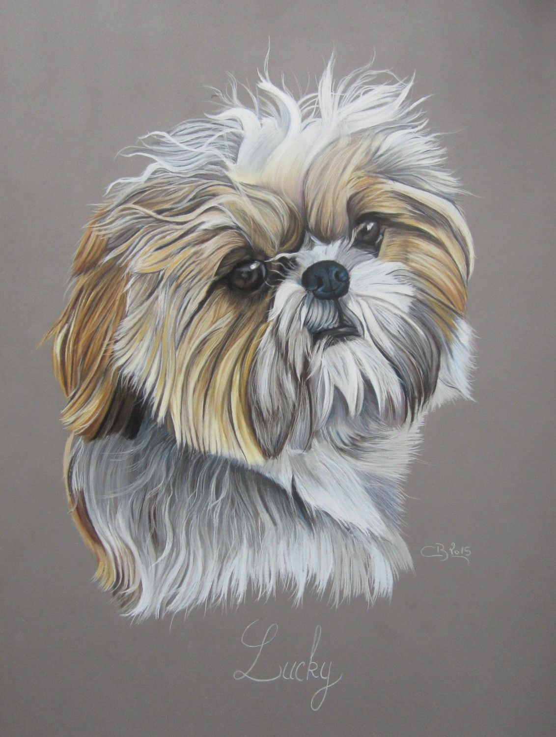 how to draw a shih tzu for kids