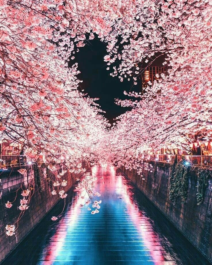 Wallpaper Beautiful Nature Nature Photography Places In Tokyo