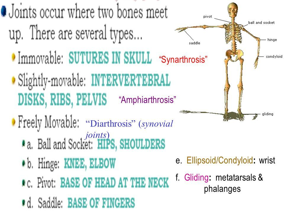 Best 25+ Synovial joint ideas on Pinterest | Joints in human body ...
