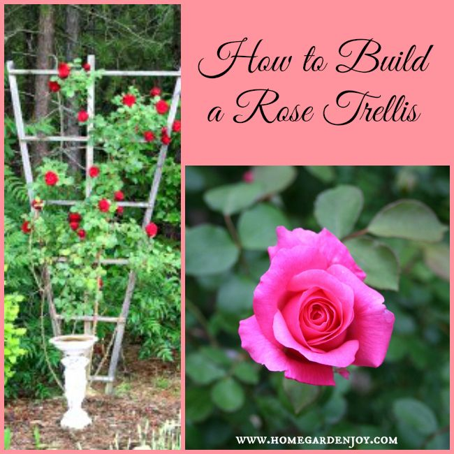 How To Build A Climbing Rose Trellis Home Matters Party Posts