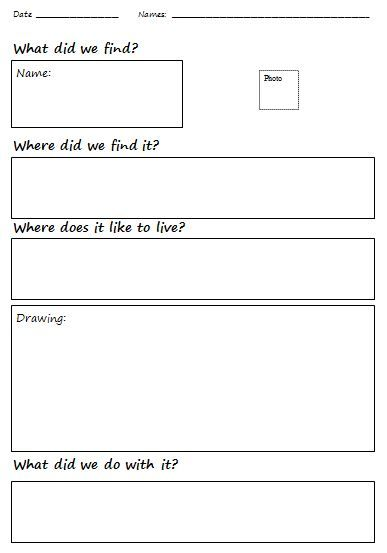 An Insect Observation Study Sheet Apologia Zoology 1
