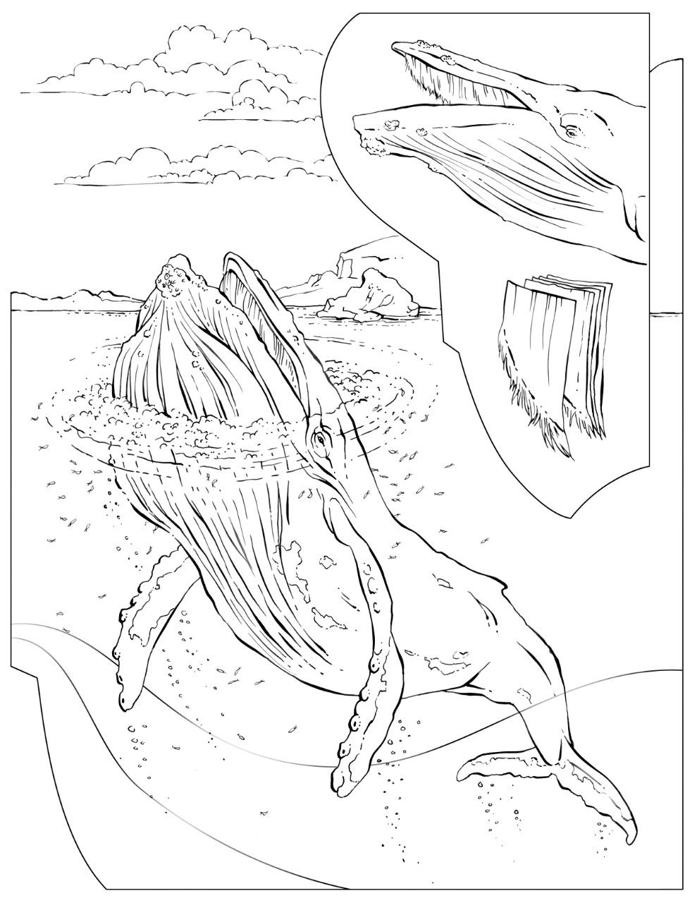Coloring Book: Animals (A to I) | Humpback whale, Coloring books and ...