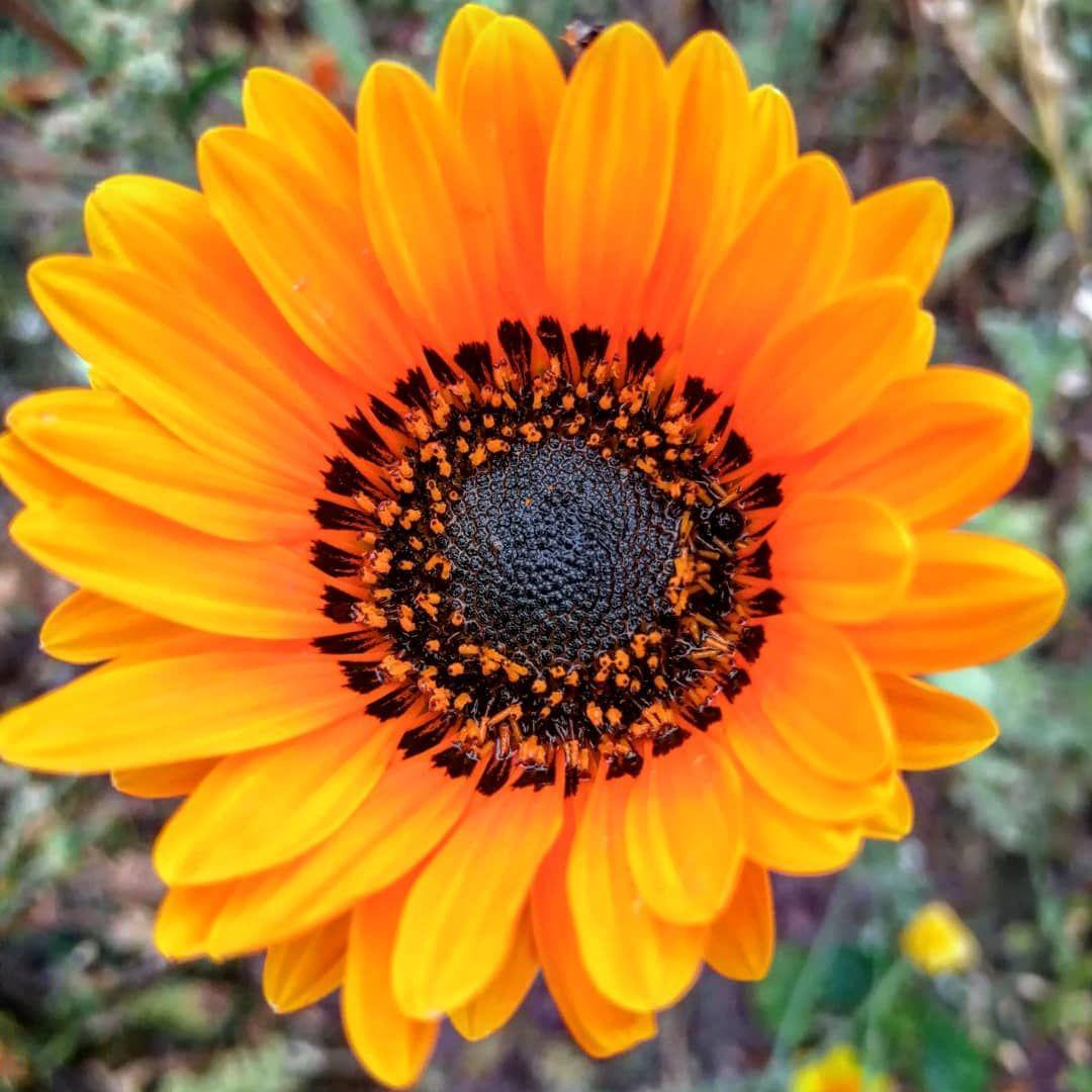 Guten Morgen Habt Einen Schonen Tag Blumen Flowers Fruhling Blumenliebe Spring Flower Nature Flowerpower Flow Blumen Fotografie Blumen Wiese Blumen