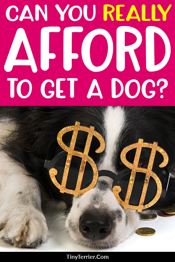 Can You Afford A Dog Discover 14 Hidden Costs When Getting A New Dog In 2020 Dogs Dog Care Checklist Dog Health Tips