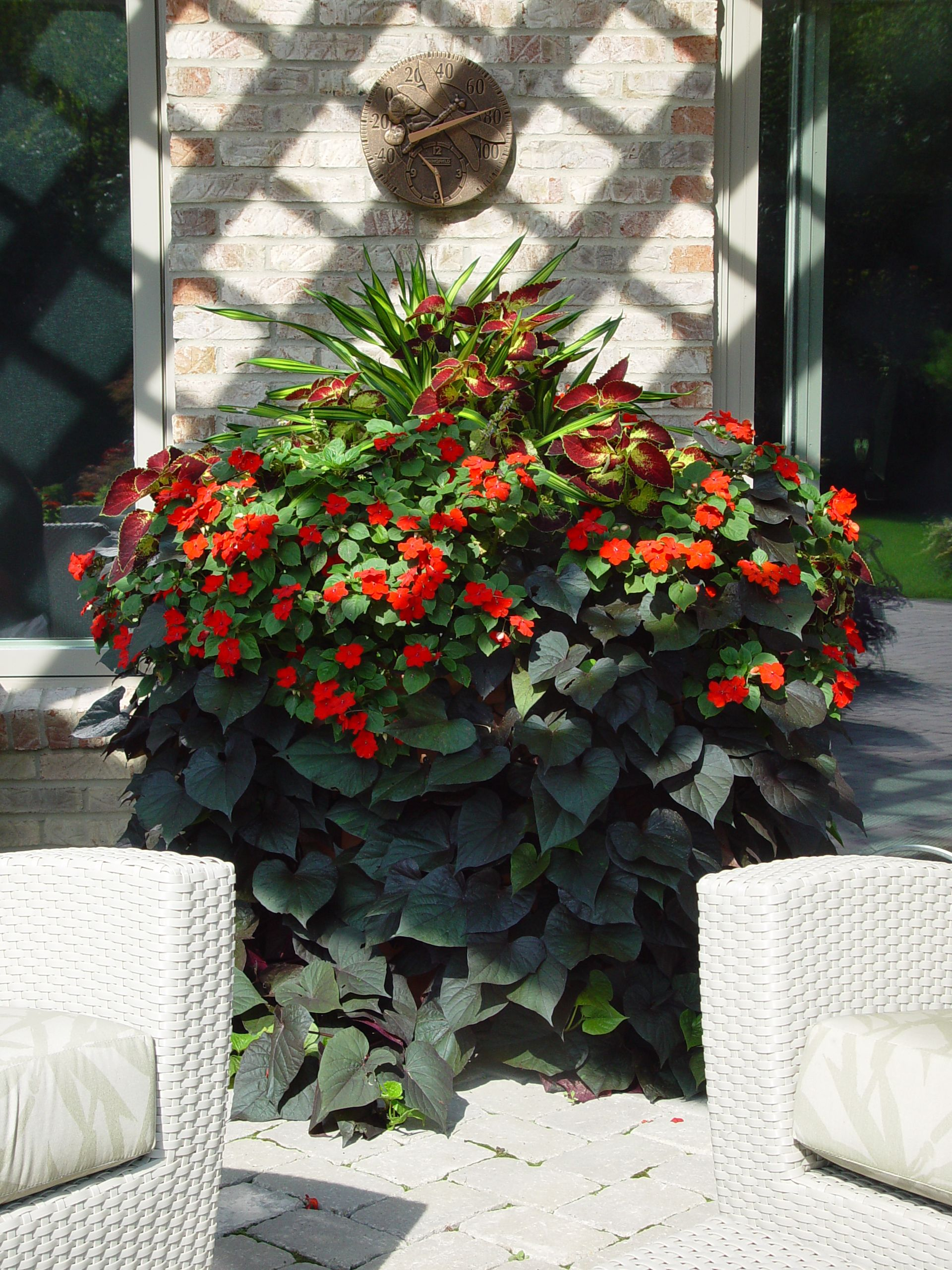 Orange Impatiens And Black Sweet Potato Vine Container
