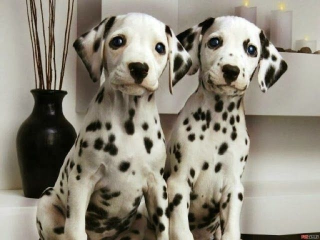 5 amazing twin pets, click the pic to see all