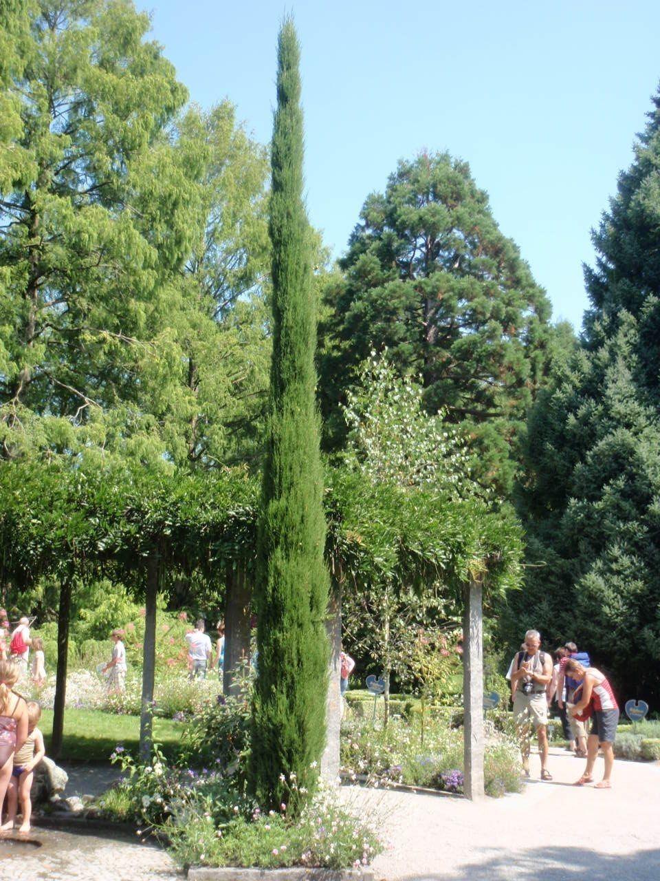 Wer Kennt Sie Nicht Diese Schlanken Zypressen Die Bilder Und Fotos Aus Italien Und Dem Mittelmeerraum Zieren Nbsp Toskana Zypresse Toskana Pflanzen Kaufen