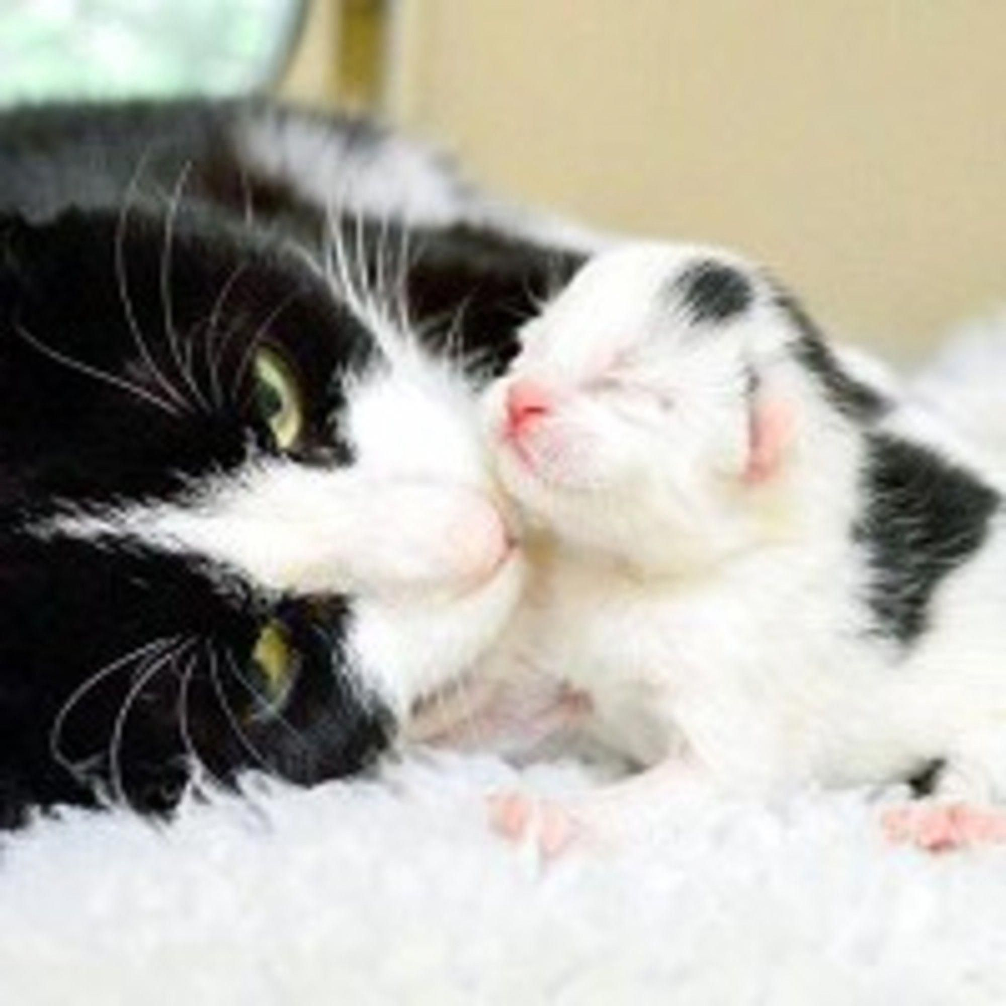 Tipsy The Cat Mama Is Thankful Because She And Her 4 New Born Kittens Are In Good Hands She Was Found With A Big Wobbl Pretty Cats Cat Lovers Newborn Kittens