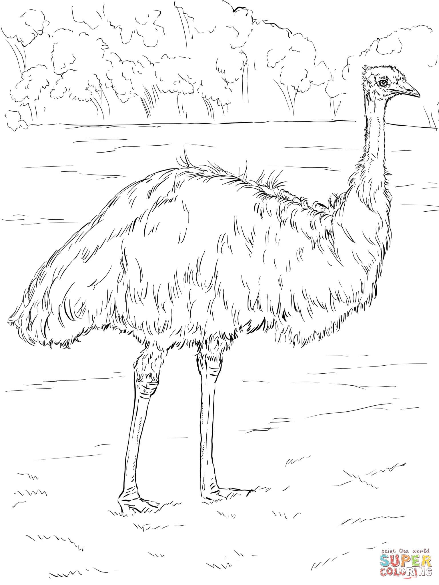 Realistic Emu | Super Coloring | Chehaw Animal Coloring Pages ...