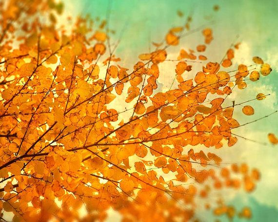 Fall Photography Autumn Leaves Autumn Photography persimmon orange leaves turquoise nature tree hiking fall naturalist photo Fire In The Sky