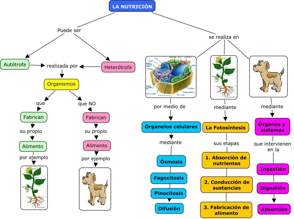 Seres Vivos Autotrofos Y Heterotrofos Autotrofos Y Heterotrofos Clase De Biologia Biologia