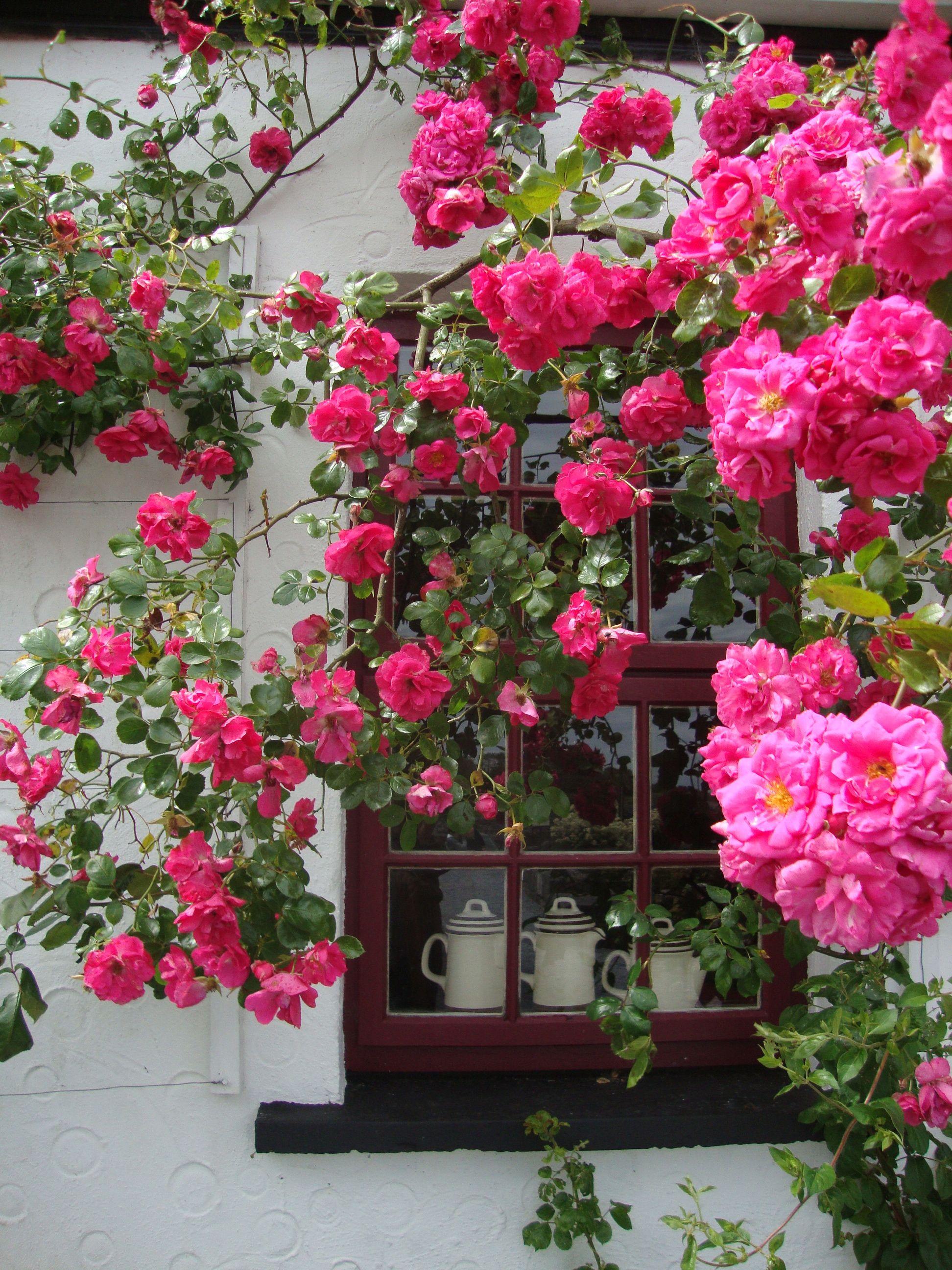 Farah 39 s fuchsia cottage raspberry cottage pinterest - Fioriere per davanzale finestra ...