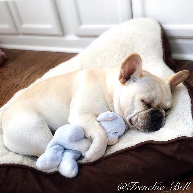 "Batpig & Me Tumble It • Parfait says…""Ugh…. Mondays Wake me up when it's..."