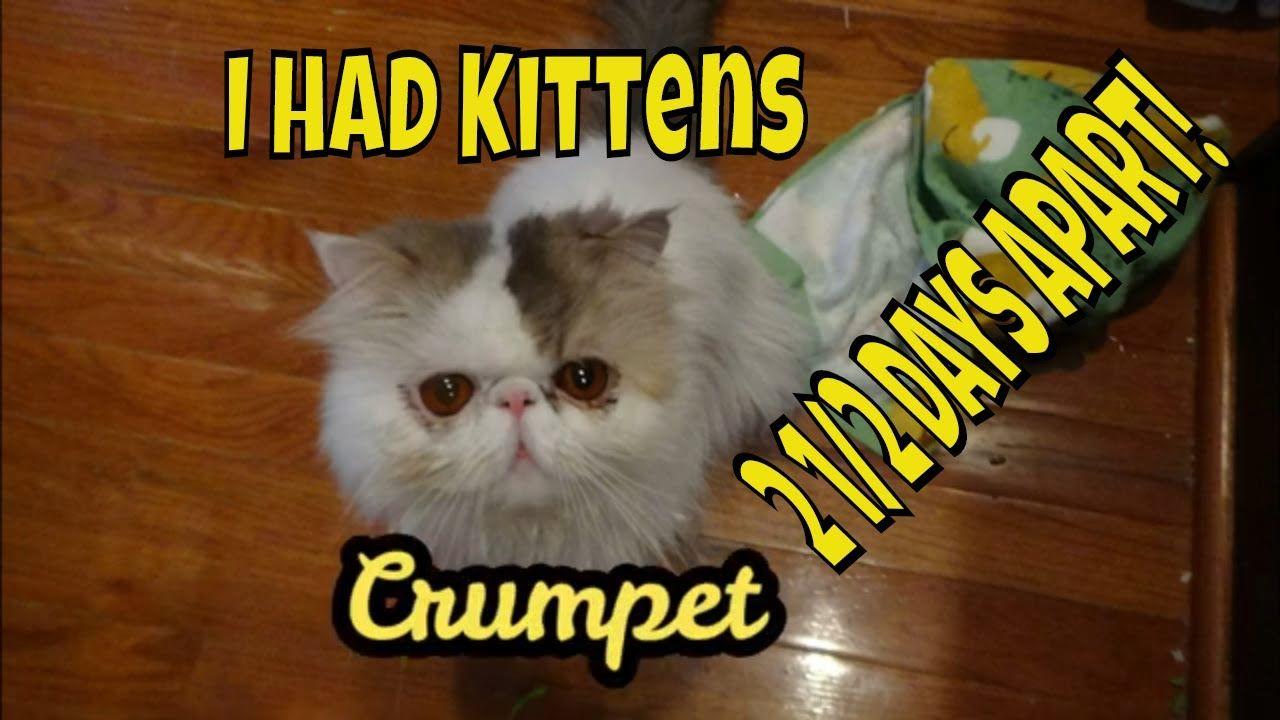 My Cat Had Kittens 2 1 2 Days Apart In 2020 Cat Birth Kittens Kitten Care