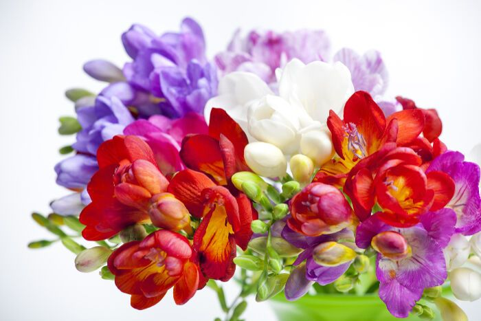 Filler Flowers In Bouquets Freesia Flowers Freesia Flowers Flowers Flower Meanings