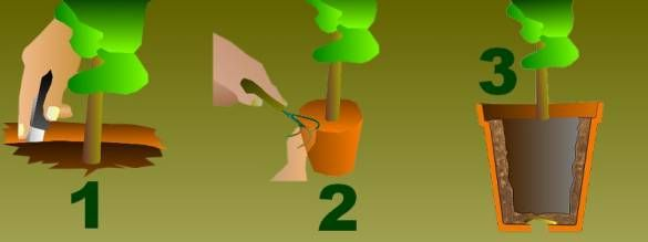 rempotage:comment rempoter fleurs et arbustes