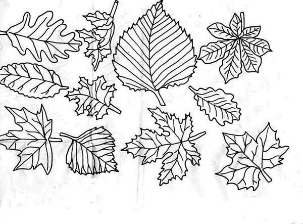 Image of Autumn Leaf Coloring Page  Rug hooking ideas  Pinterest