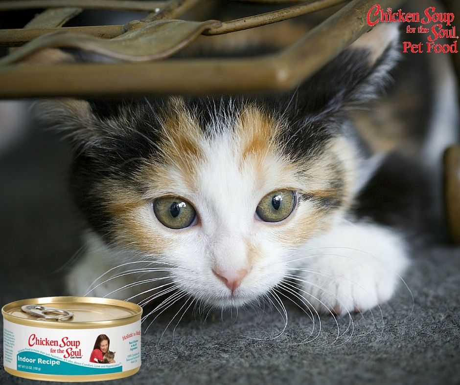 At Chicken Soup For The Soul We Know That Food Is Very Important For Your Cat S Well Being That S Why We Formulated Chicken Soup For The Cats Cute Cats Pets