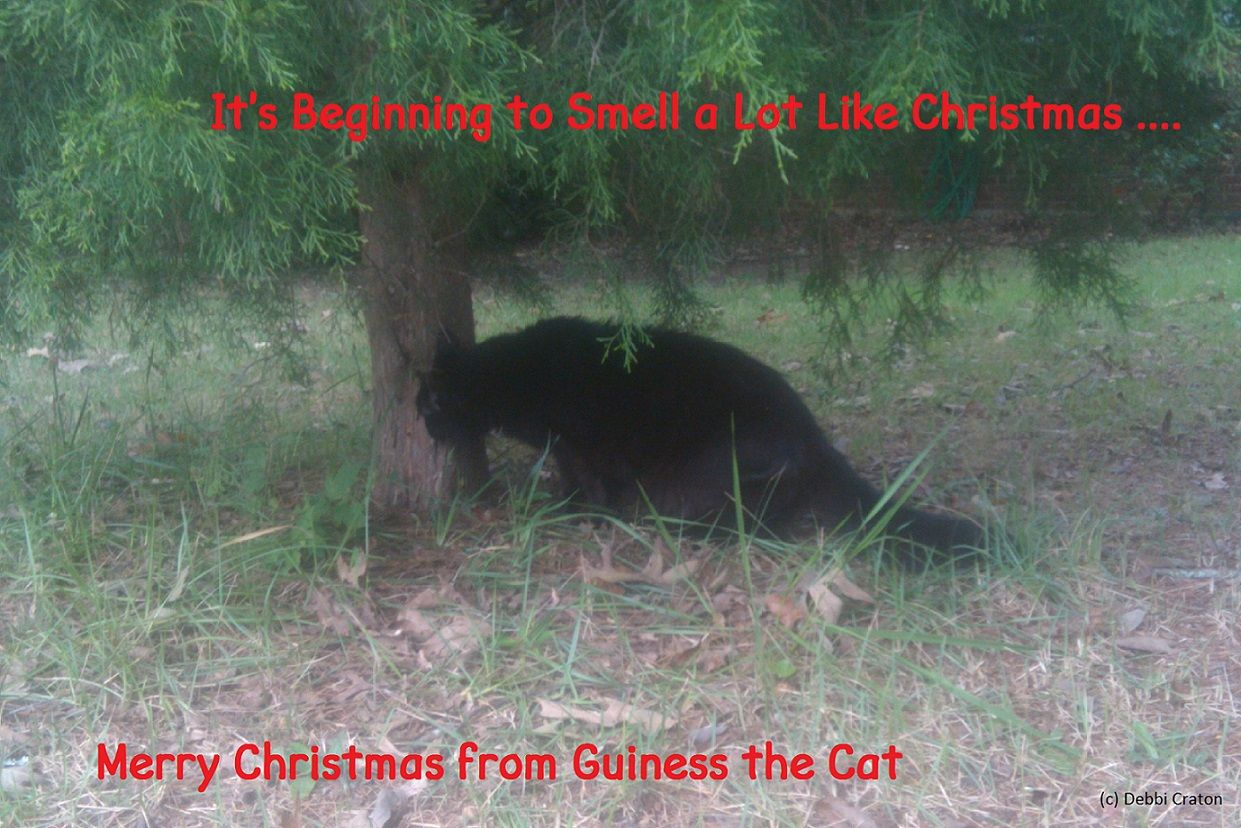 It's Beginning to Smell a Lot Like Christmas, by Guiness the Cat - Persona Paper