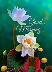 Good Morning Video Whatsapp Wishes Quotes Message Greetings       This image has…