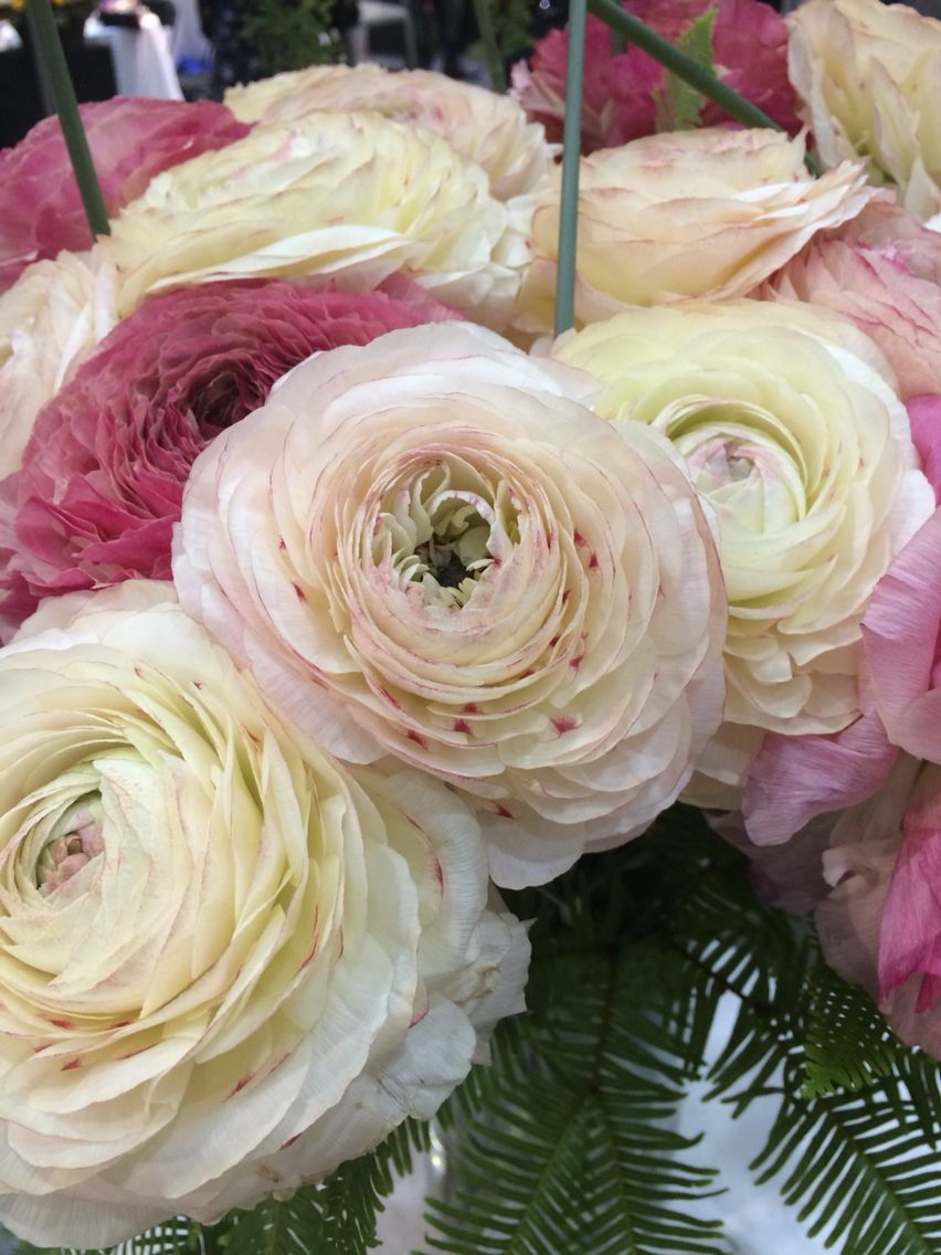 Love Love Love Ranunculus Beautiful Blooms Flowers Bloom