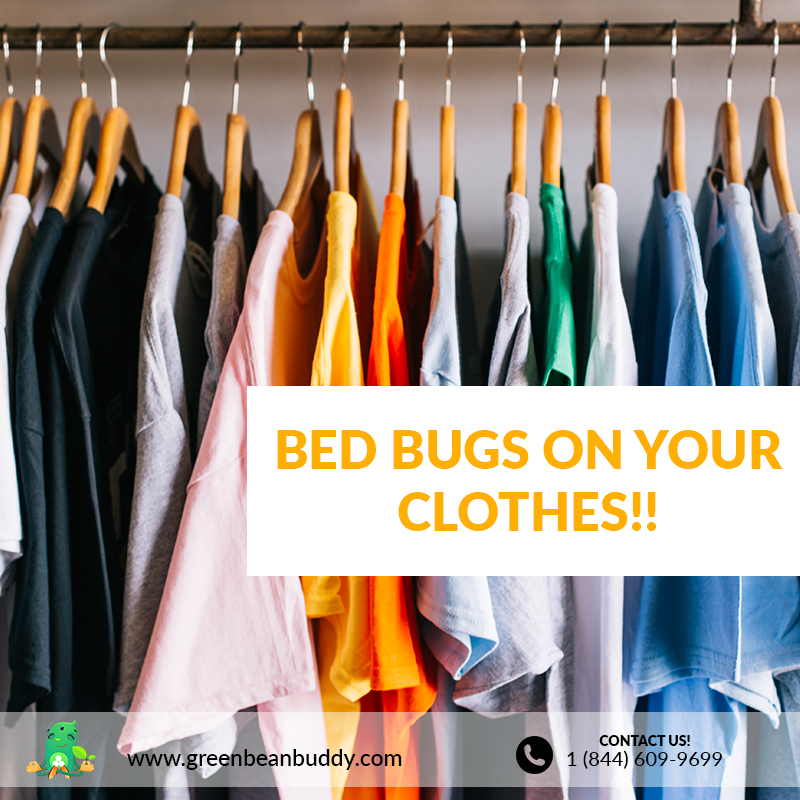 What to do when you have bed bugs on your clothes? Read